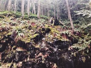 35-Cascades-12.4